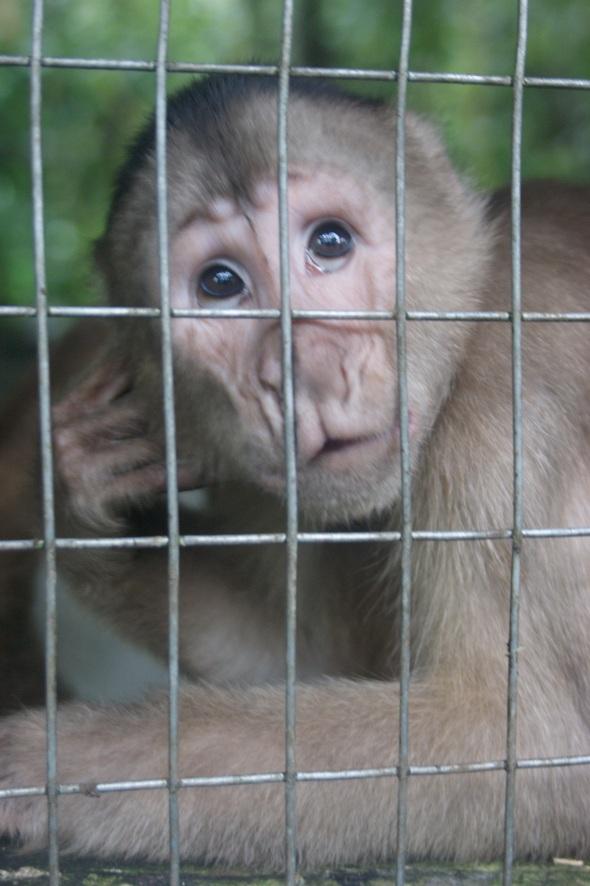Monkey, Ecuador