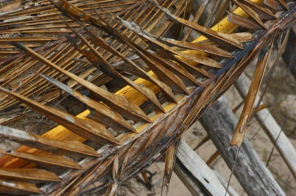 Dry palm, Kapaa, Kauai