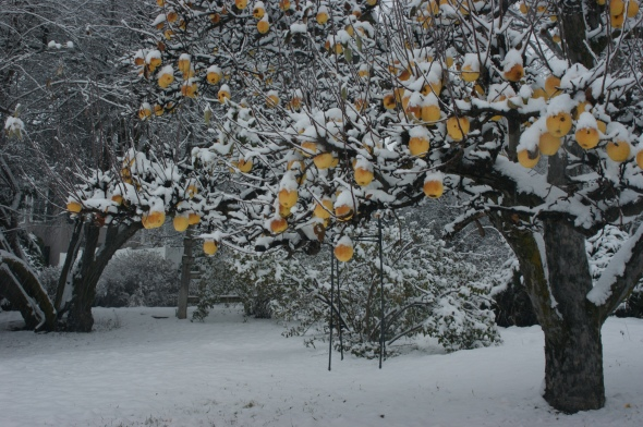 Snowy apples 3