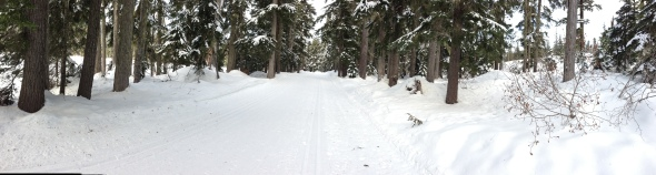 White Pass Trails