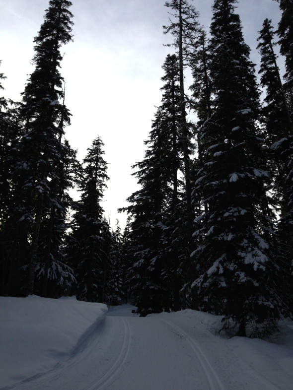White Pass Trails 3